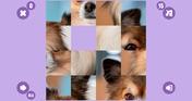 Dog Barley-Break🐶 4