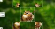 Puzzle Art: Rodents