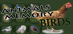Animals Memory: Birds