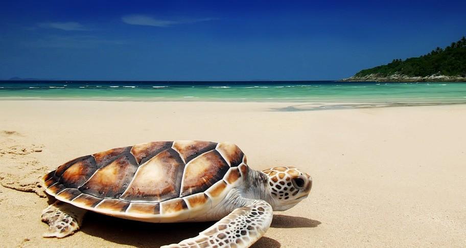 Crazy Puzzle -Turtles