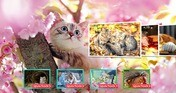 Cat's Life Jigsaw Puzzles