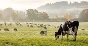 Crazy Puzzle -Rural Landscapes