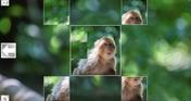 Puzzle Art: Primates