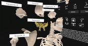 Everyday Anatomy VR