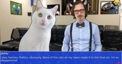 Cat President 2: Purrlitical Revolution