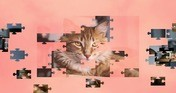 Jigsaw Puzzle Cats - The Puzzle Cat Game